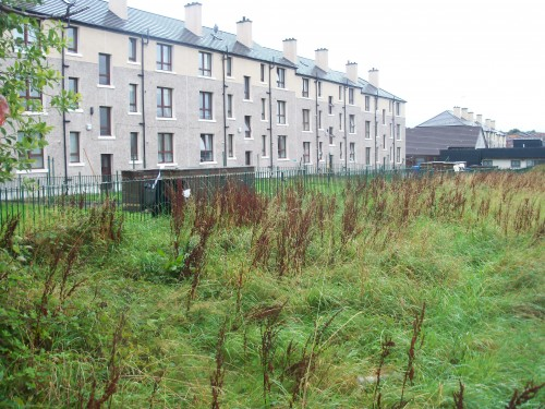 Parkhead Community Garden - how it is now